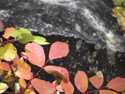Two-day fall photography class at Rocky Mountain National Park on Sept. 20-21 – Sky Hi News